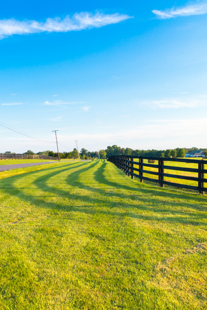 pastureland: Green pastures of horse farms with fence line and shadow along a country road.Countryside summer landscape.