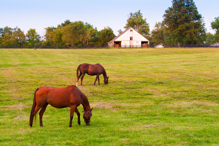 Horses at horse farm at evening. Country summer landscape. Stock Photo