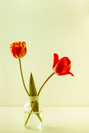 Two tulip flowers in glass vase on light background, retro toned.