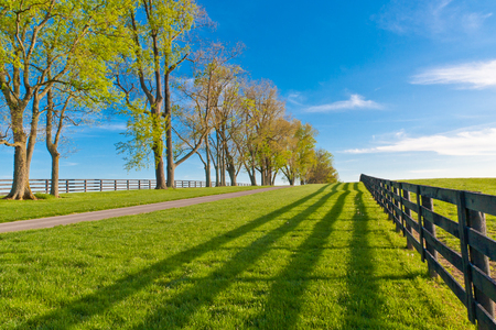 Green pastures of  horse farms at spring