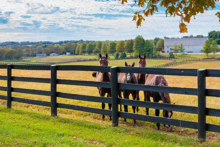 Horses at horsefarm. Autumn country landscape.