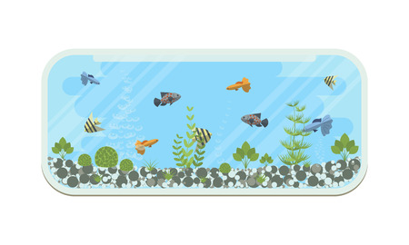 fishtank: Cartoon vector home glass aquarium illustration with water, plants and fish. Isolated aquarium life clipart in flat style.