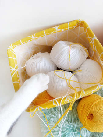 White cat paw plays with balls of yarn.
