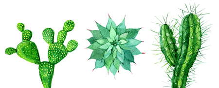Satz des Kaktus lokalisiert auf weißem Hintergrund, Aquarellillustration Standard-Bild - 93786144