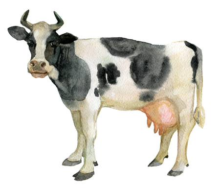 Cow, farm animals, isolated on white, watercolor illustration