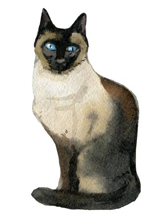 Gato siamés aislado sobre fondo blanco, ilustración acuarela Foto de archivo - 97659078