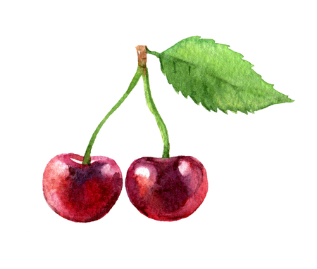 Cherry isolated on white background, watercolor illustration Standard-Bild - 102036724