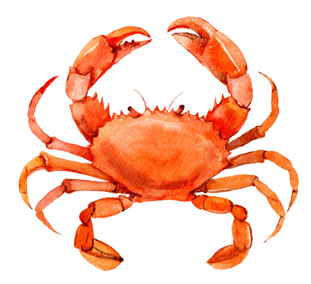 Crab isolated on white background, watercolor illustration