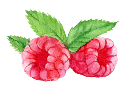 Raspberries with leaves isolated on white background, watercolor illustration Standard-Bild - 103053977