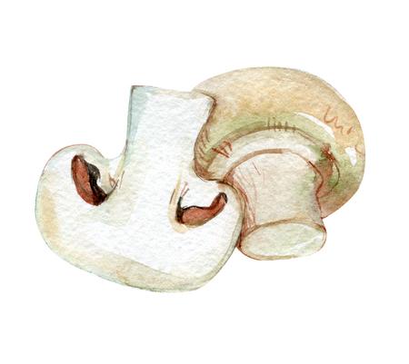 Champignon, mushroom isolated on white background, watercolor illustration Foto de archivo - 116495963