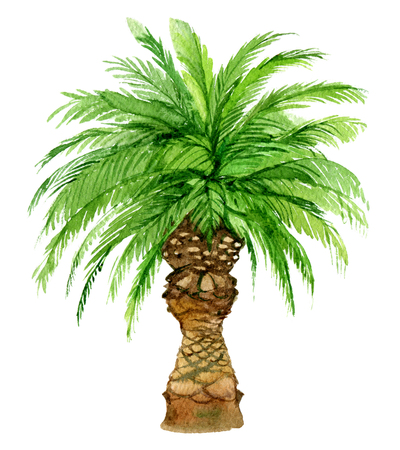 Palm tree isolated on white background, watercolor illustration Standard-Bild - 116495967