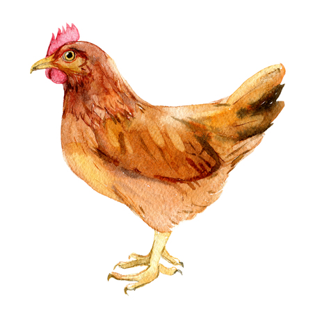 Brown chicken isolated on white background, watercolor illustration 免版税图像