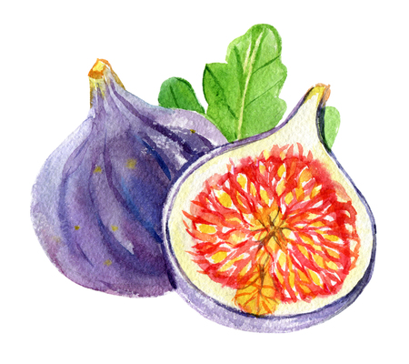 Figs with leaf isolated on white background, watercolor illustration Standard-Bild - 116495989
