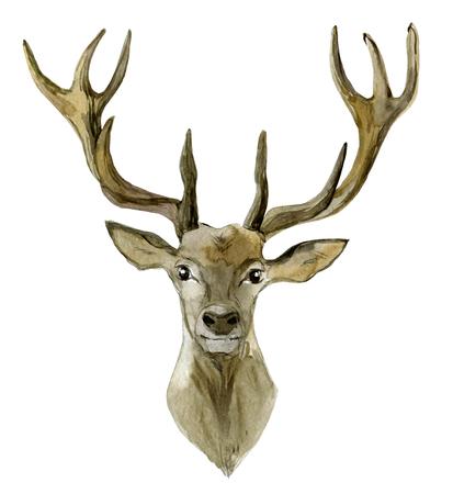 Deer portrait isolated on white background, watercolor illustration Standard-Bild - 116495991