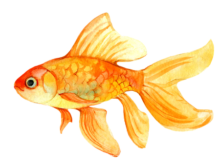 Gold fish isolated on white background, watercolor illustration Foto de archivo - 116495992