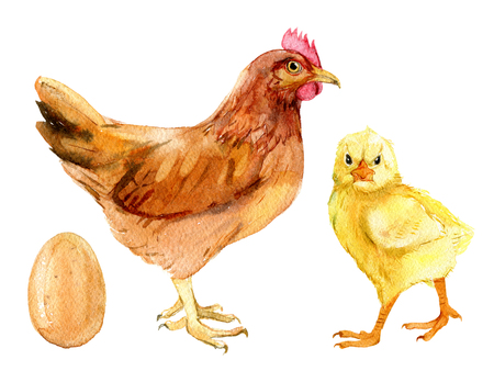Brown chicken, cute chick and egg, isolated on white background, watercolor illustration Foto de archivo - 116495993