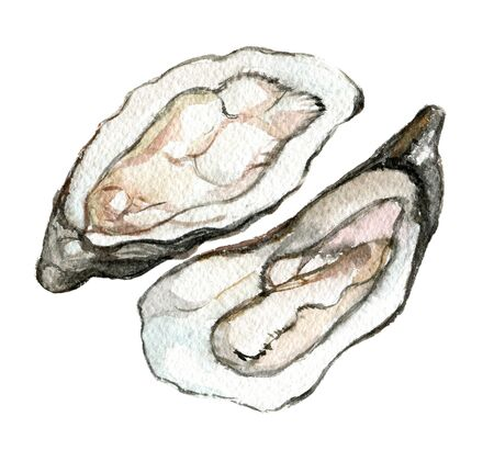 Oysters isolated on white background, watercolor illustration 版權商用圖片