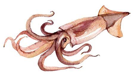 Squid isolated on white background, watercolor illustration Foto de archivo - 135834073