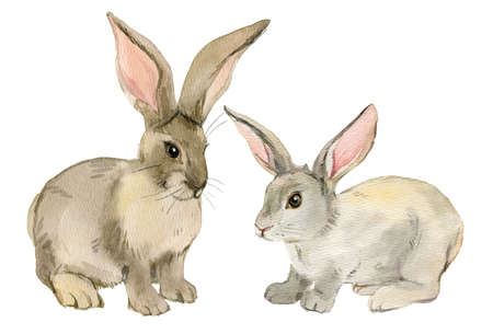 Two rabbits isolated on white background, watercolor illustration