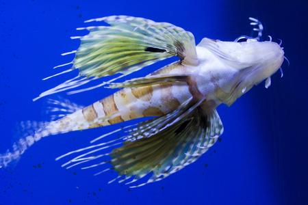 Aquarium fish close-up view from below