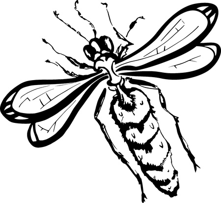 Illustration of wasp over white background Vector