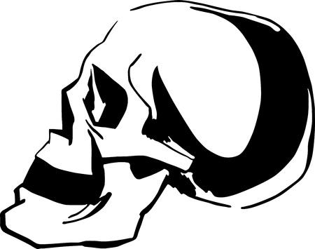 skull cranium: Black and white sketch of skull