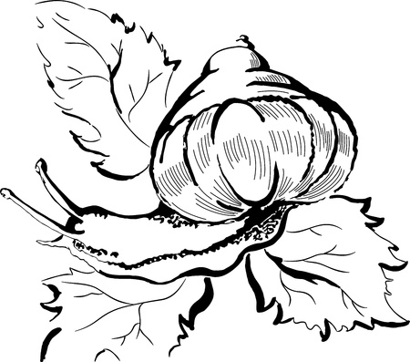 slowness: Creative design of snail crawling on leaves Illustration