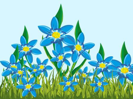 Illustration of a scilla bifolia, you can use as a nice background Illustration