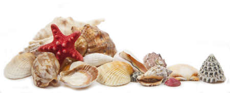 shells on a white background photo