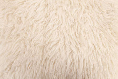 wool sheep closeup photo