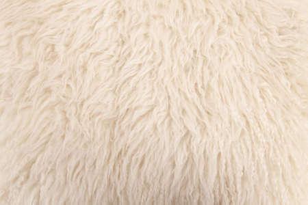 wool: wool sheep closeup