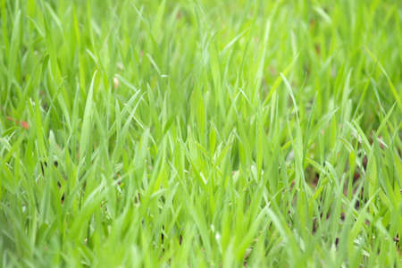 soggy: Green grass can be used for background