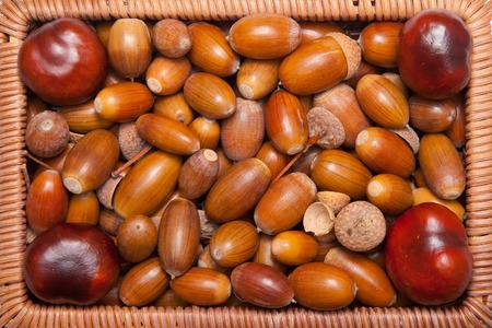 acorns closeup