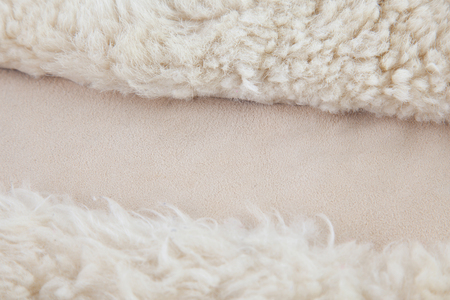 ovine: wool sheep closeup
