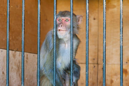 monkey in a cage in a menagerie 写真素材