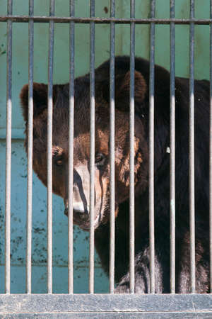 bear in a cage in a menagerie