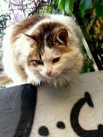 Street Cat Looking Banco de Imagens