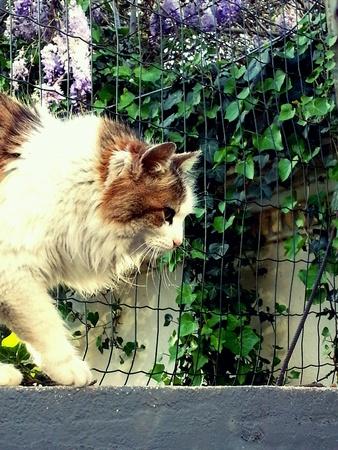 Cat   Imagens