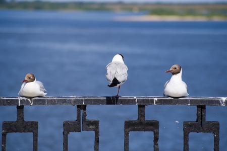 resting seagulls on barrier in the river port Stock Photo