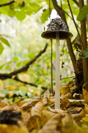 tall autumn mushroom in the forest