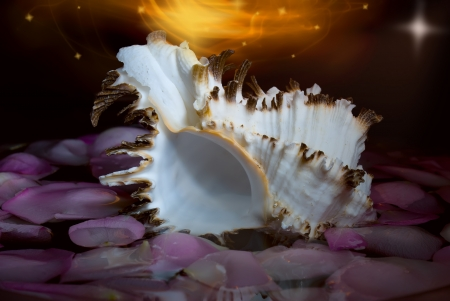 Seashell among rose petals over black background and fiery motion