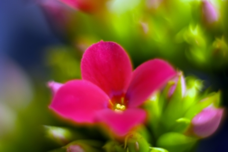 Abstract blurred flowers