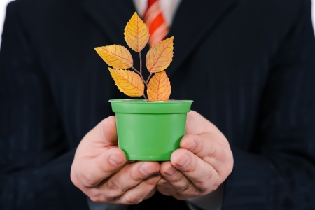 Businessman is holding green pot with a plant Stock Photo