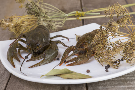 Two green crayfish on the square plate on wooden background close-up