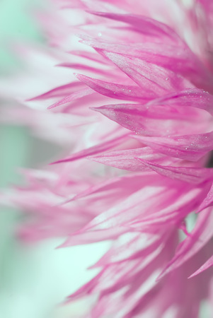Close up of Abstract beautiful pink flower