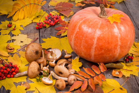 Pumpkin, mushrooms, rowanberry and maple leaves on old wooden table as autumn background decoration. Thanksgiving day concept.