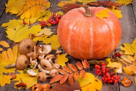 rowanberry: Pumpkin, mushrooms, rowanberry and maple leaves on old wooden table as autumn background decoration. Thanksgiving day concept.