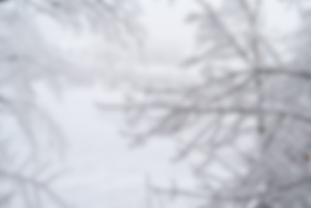 Blurred winter nature background, trees covered by snow Stock Photo