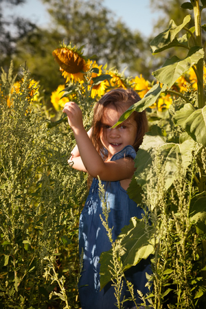 Little girl in blue dress between sunflowers.Sunny summer day in a field of sunflowers.