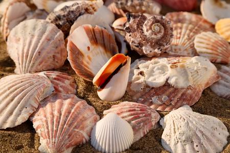 Seashells on the sand of a beach, seashell summer background Stock Photo